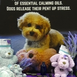 On-Trend: Stress Solutions for Pets